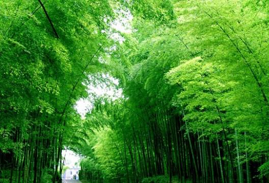 Manfaat Pohon Untuk Kehidupan Manusia serta Lingkungan